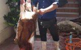 قربانی کردن چهار راس گوسفنددر روز عید قربان بین خانواده مددجویان تحت پوشش مرکز نیکوکاری ابوذر